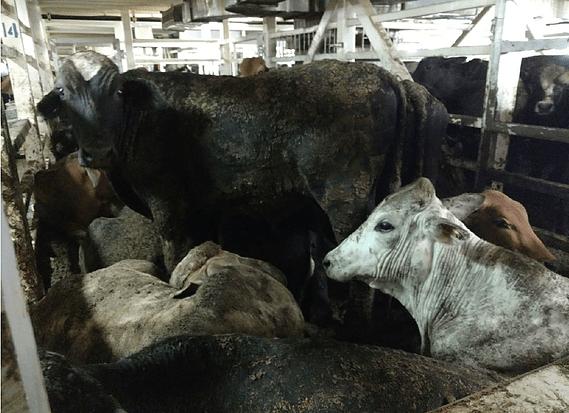 gado navio valex