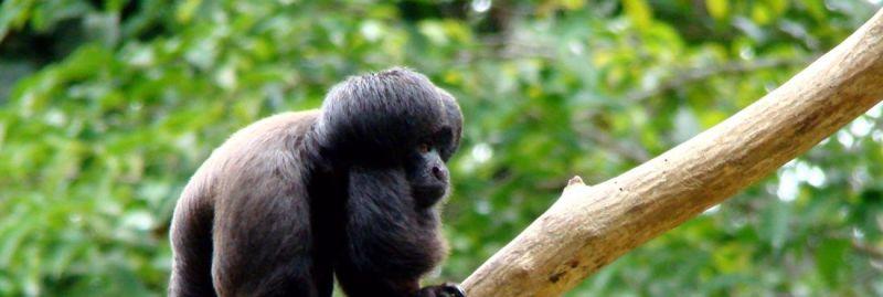 macacos-2-ebc