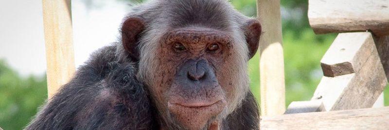 macacos-3-ebc