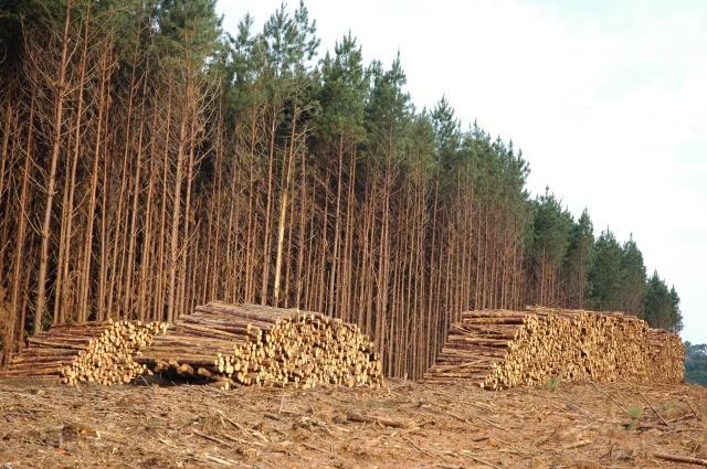 madeira 16 embrapa 0