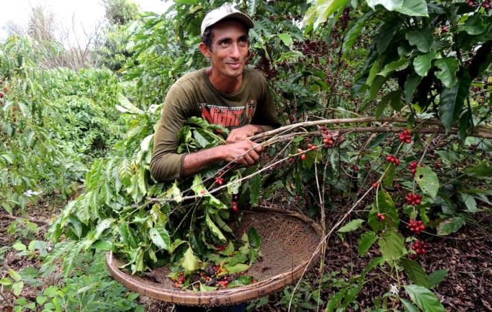 cafe-em-agrofloresta_2 - 3