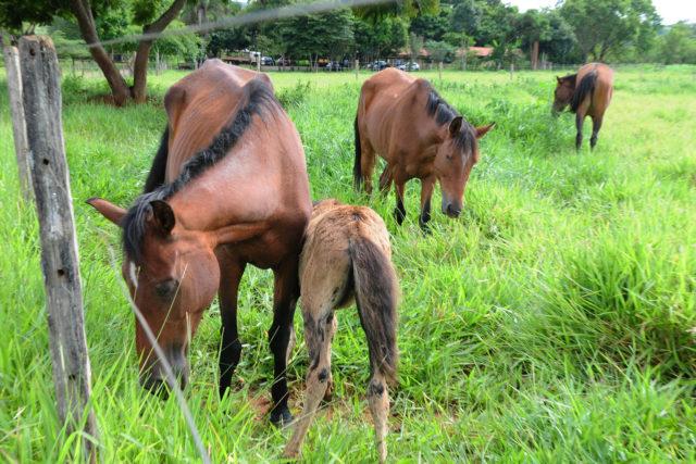 Abandono de equinos e bovinos pode ser denunciado por telefone