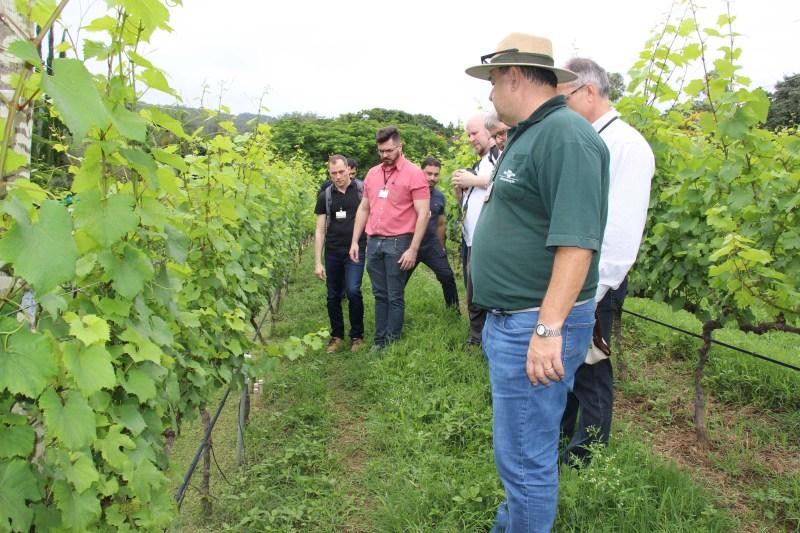 irrigacao precisao vinhedos 2