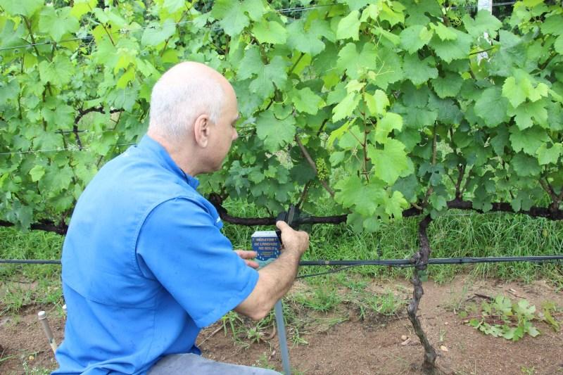 irrigacao precisao vinhedos