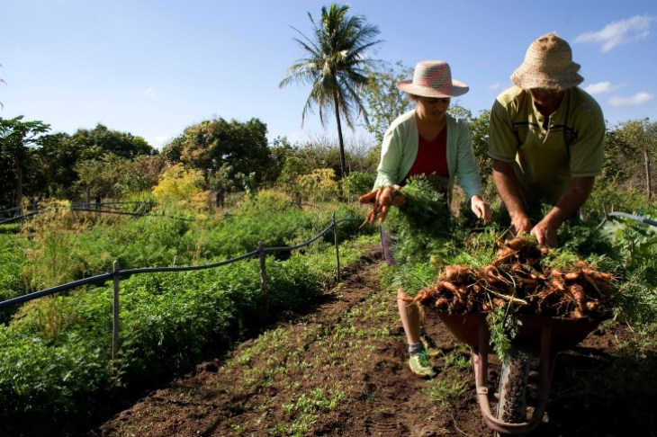 Agricultura-familiar 9 4