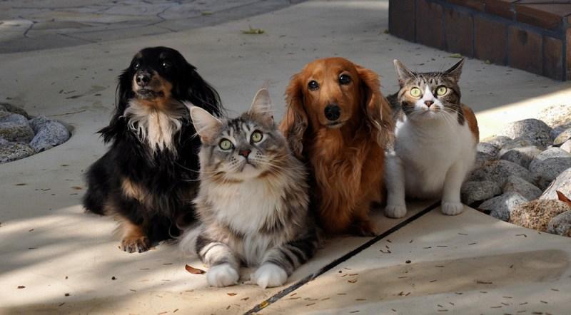 caes e gatos.jpg
