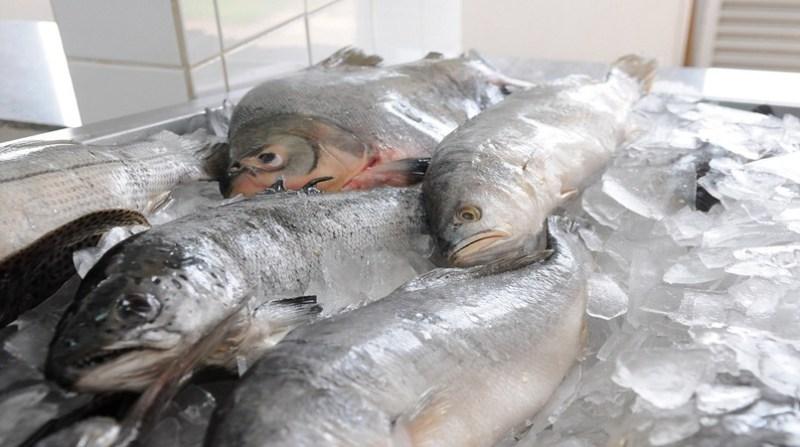 pescado ebc