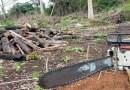 Amazônia perde área verde igual a 200 mil campos de futebol em 10 meses