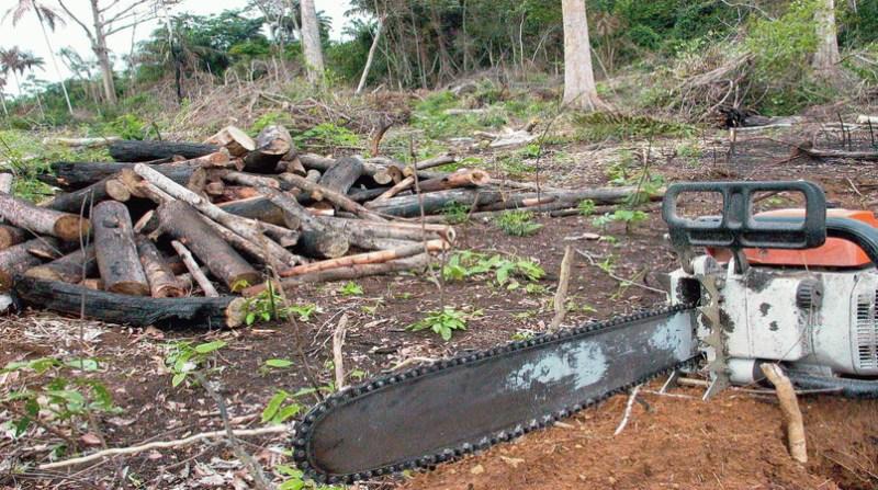 amazonia desmatamento