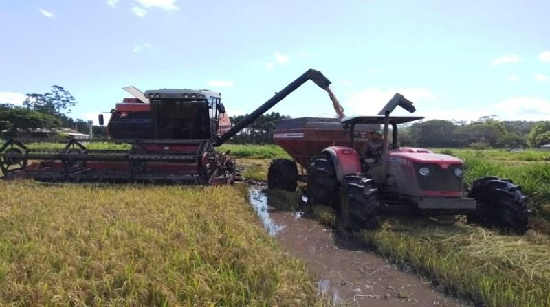 arroz transporte 8 6