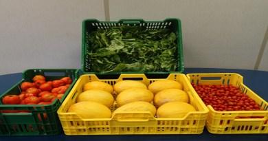 Consumidores buscam frutas e hortaliças com qualidade e boa aparência
