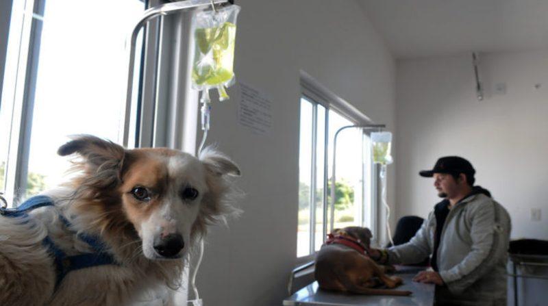 hospital-veterinario-balanco-atendimentos-tony-winston-768x512