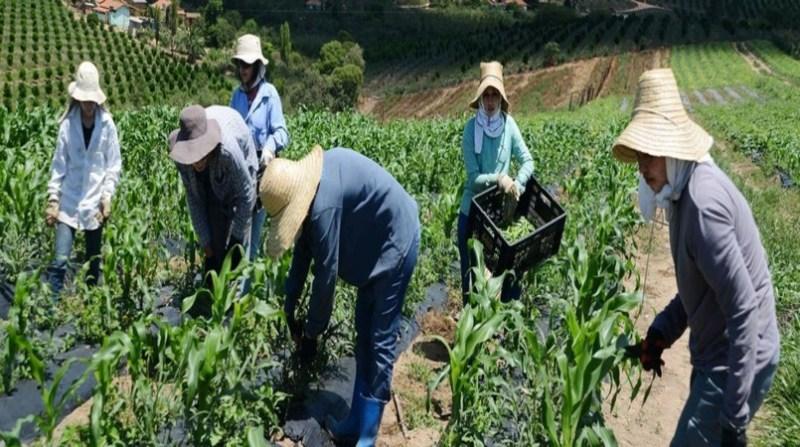pequenos _agricultores__comunidade_noiva_do_cordeiro__Foto-_Omar___Freire_Imprensa_MG