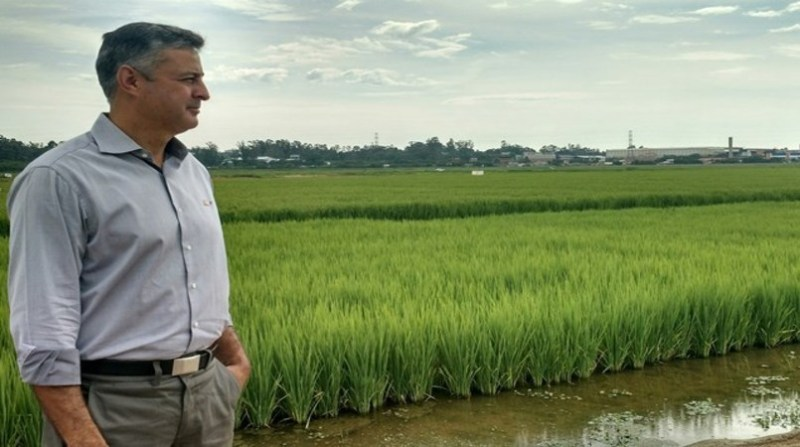 FEDERARROZ-Henrique-Dornelles-presidente-Crédito-AgroEffective