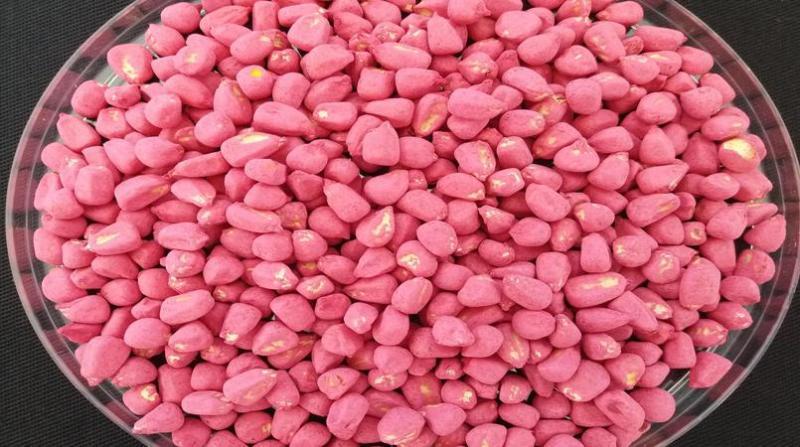 Sementes de milho tratadas com o programa da Rotam
