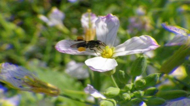 abelhas sem ferrao 13 7