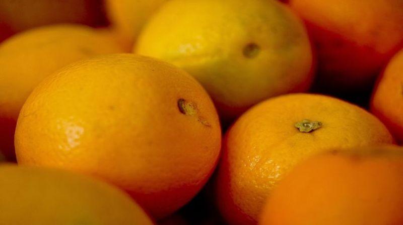 laranja elza fiuza abr