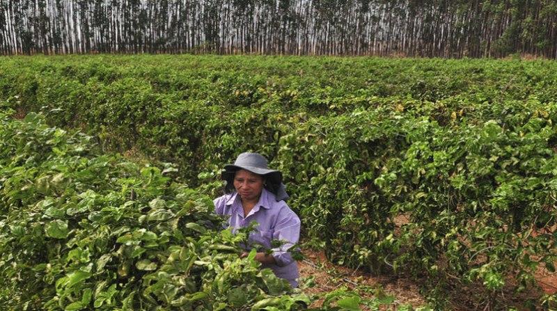 mulher campo agencia brasilia