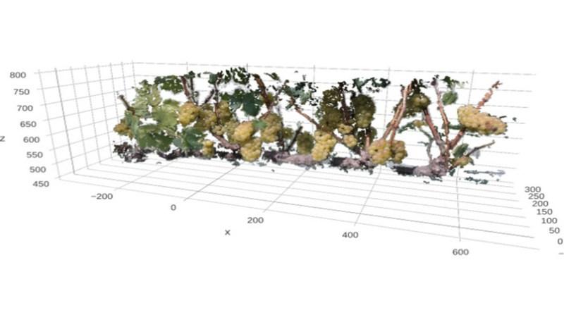 planta identificacao automatica 2