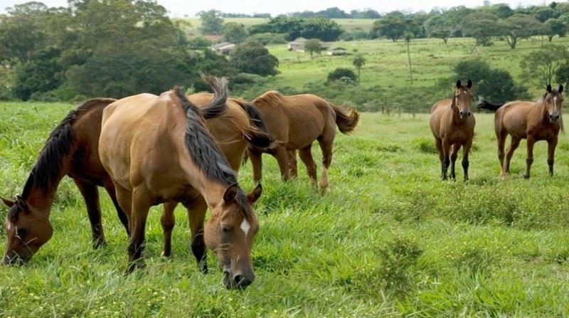 cavalos embrapa 3 8