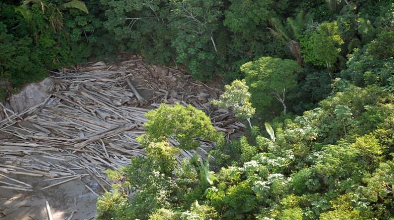 desmatamento amazonia 0 19 8