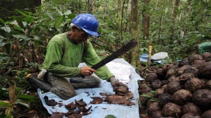 extrativista amazonia embrapa