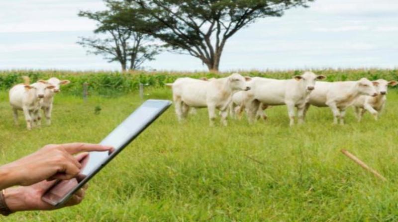 celular campo vacas