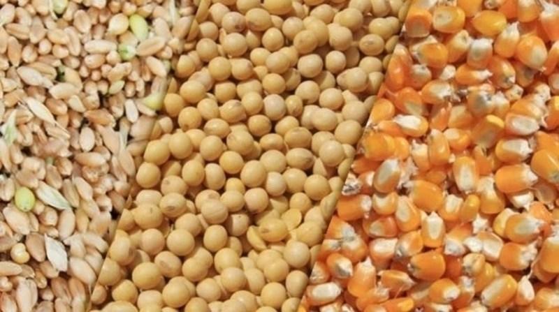 grãos,soja,milho e trigo-FAEP.jpg02.jpg02