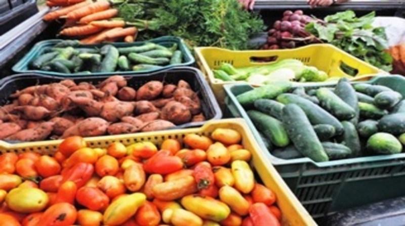 organicos tomate pepino