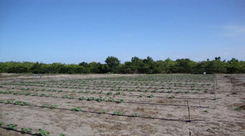 agricultura mudança climatica