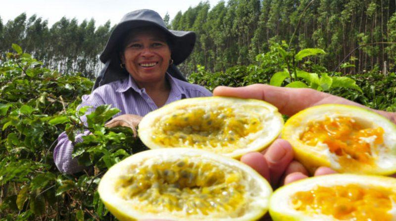 mulher plantacao maracuja tony winston agencia brasilia.jpg