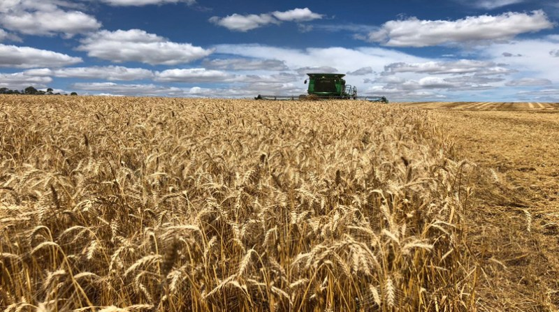 trigo colheita fecoagro divulgacao