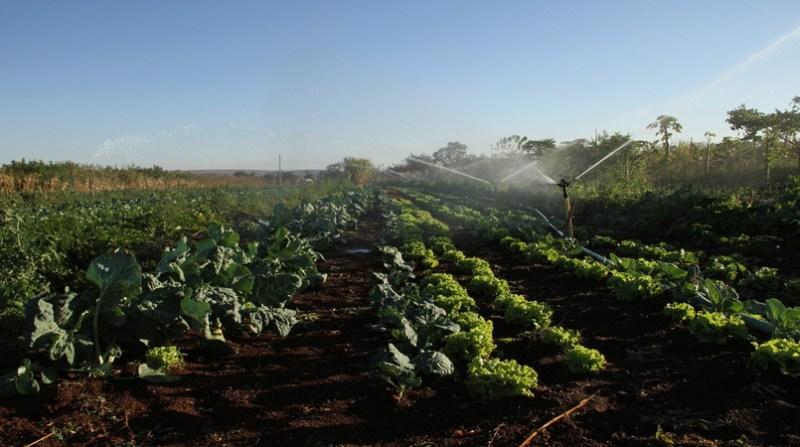 alface legumes elio rizzo
