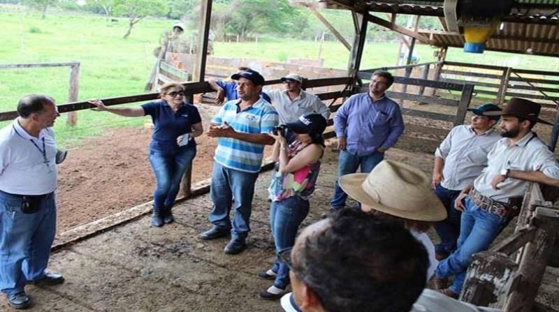 produtores de leite 11 12