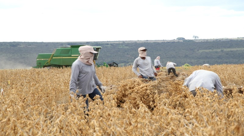 safra colheita 10 1 19