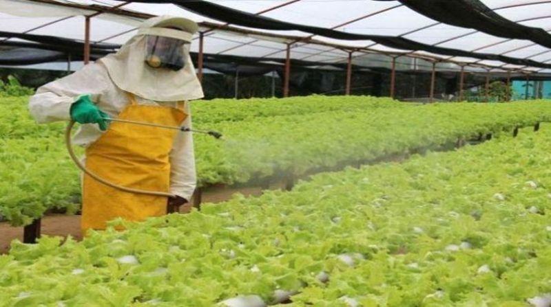 agrotoxicos aplicacao 5 19 2 19