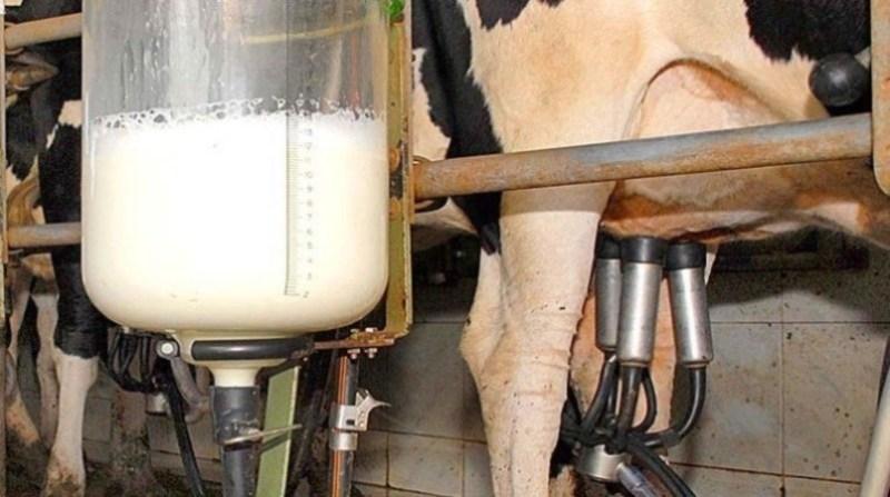 leite ordenha 8 8 2 19