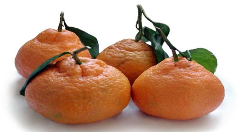 tangerina poncã arquivo ceagesp