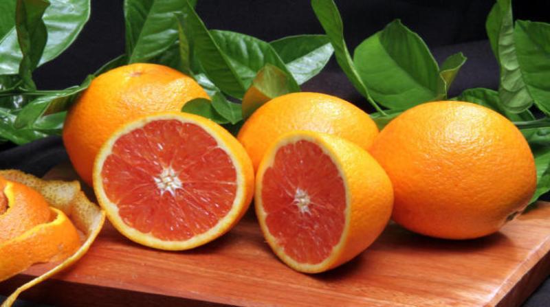 laranja paulo lanzetta embrapa 11 3 19