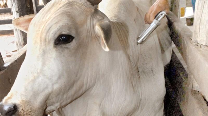 vacinacao aftosa gov to 28 3 19