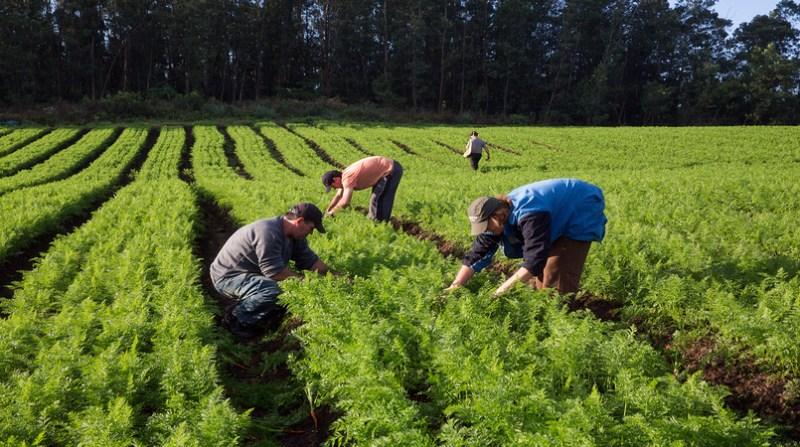 agricultura familiar 8 4 19