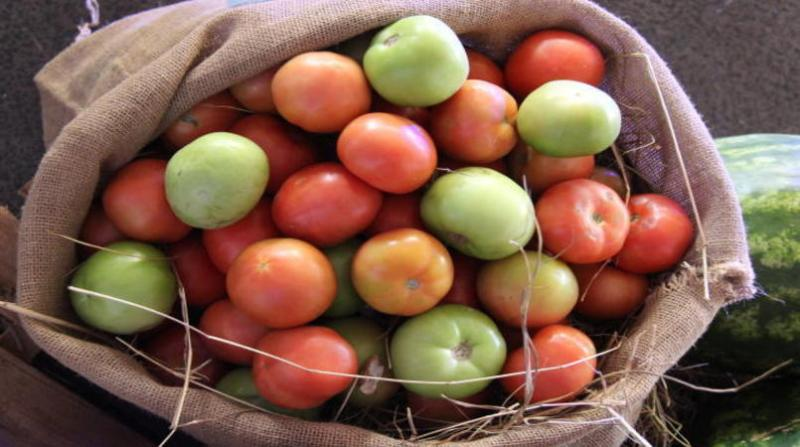 tomate claudio bezerra 16 4 19
