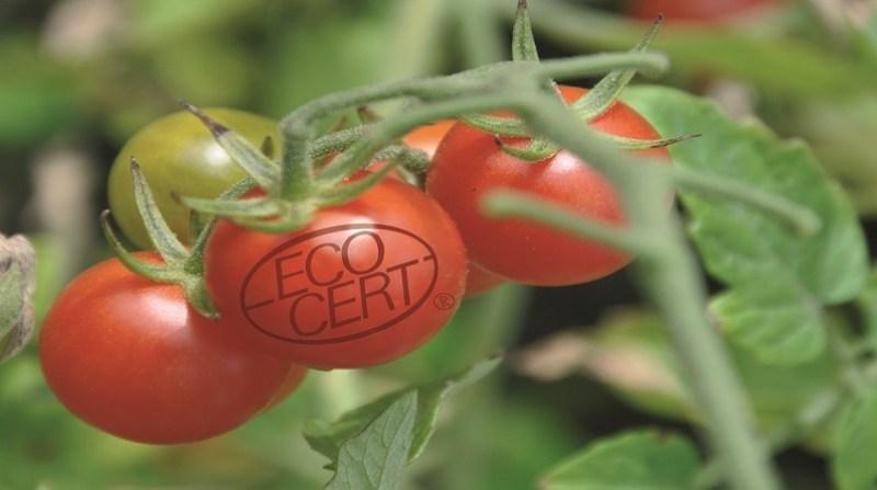 tomate organico comercio justo Selo Ecocert divulgacao