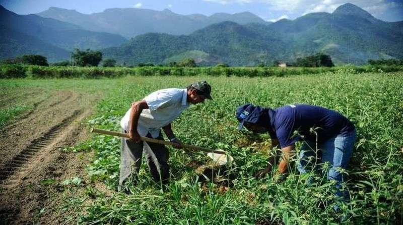 agricultores familiares 13 6 19