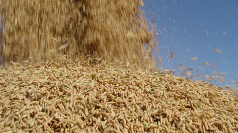 arroz irga 4 5 19