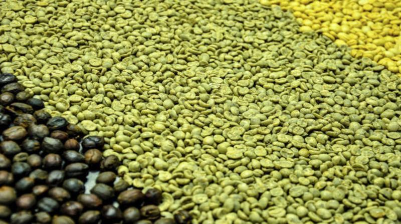 cafe 11 12 embrapa fabiano bastos
