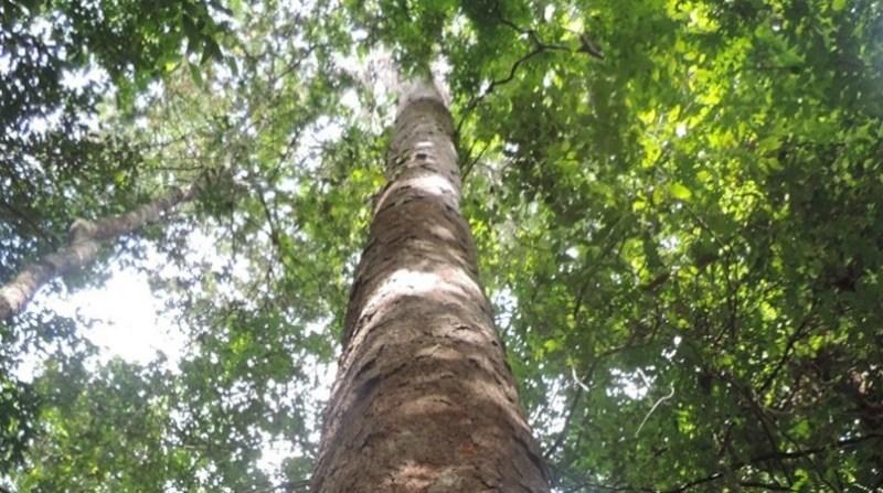 floresta amazonia embrapa