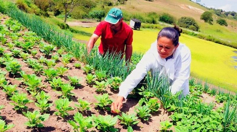 agricultura familiar uergs rs gov