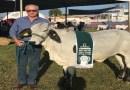 Morre em GO o produtor Ildo Ferreira, referência na criação de gado girolando
