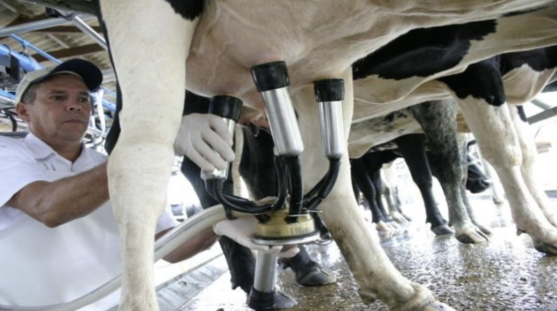 leite ordenha produtor - Foto Alcides Okubo Filho